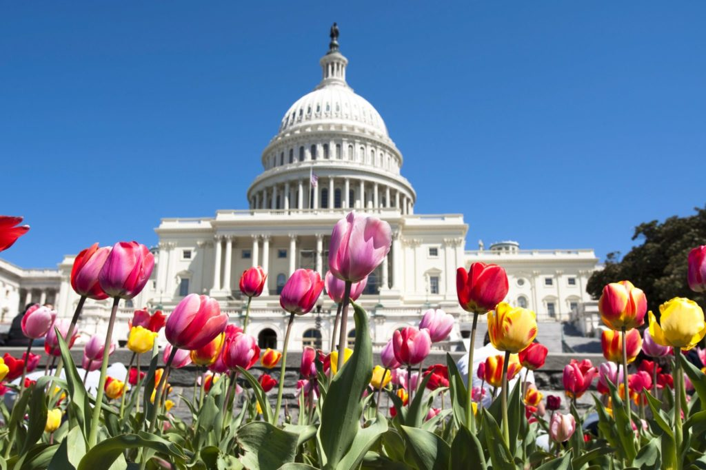 2021CR-capitol-with-pink-and-yellow-tulips-original-1024x682